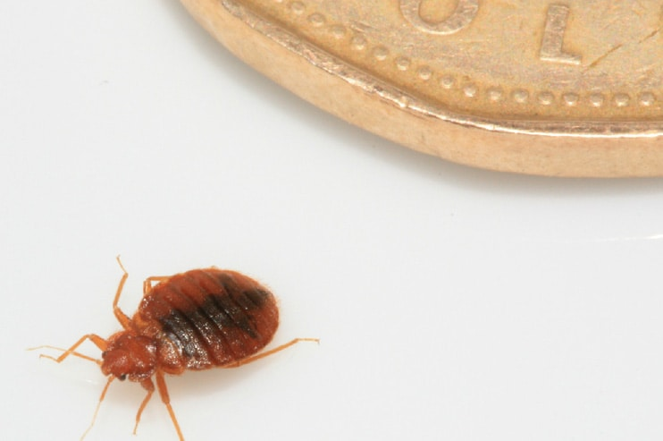 Bed Bug Heat Treatment Facts