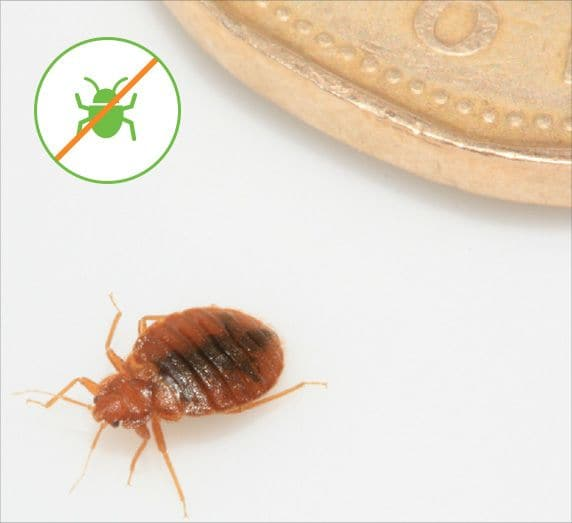 How Much Does A Bed Bug Heat Treatment Cost Greentech Pest Control